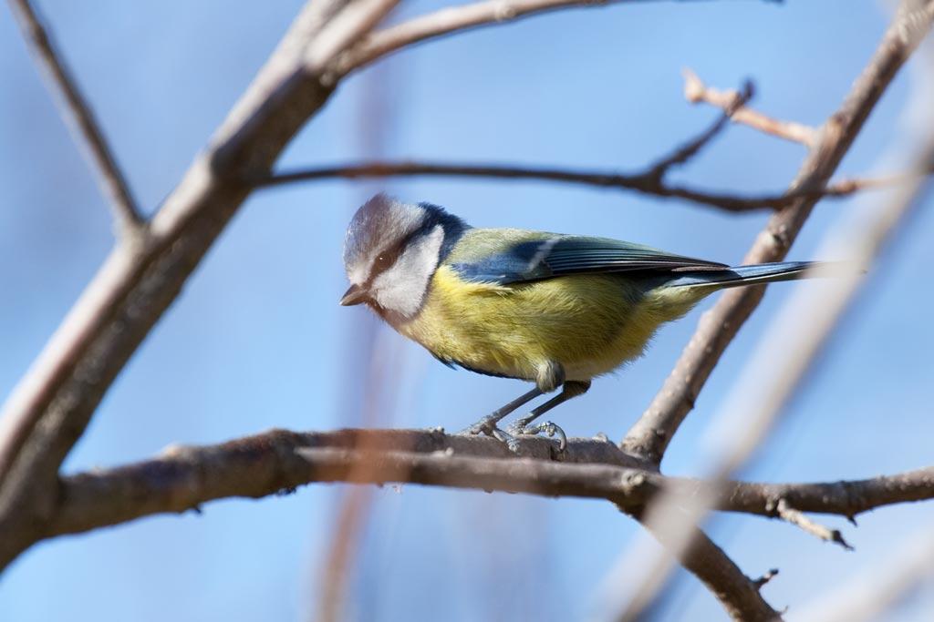 entorn-ocell